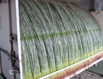 汚れ落しと変色を防ぐために水のシャワーをかけます。