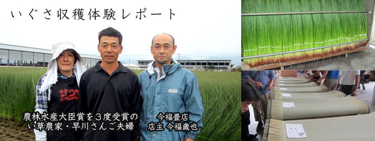 熊本県のい草刈取り